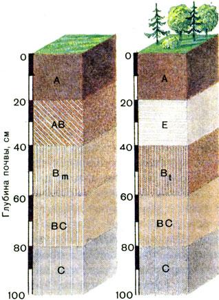 Схемы строения почвенного