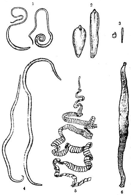 тройчатка хильды кларк от паразитов