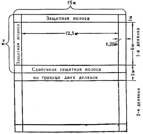 Рис. 3. Схема отбивки защитных полос в полевом опыте. Общая площадь делянки 120 м2 (15X8), учётная площадь 75 м2 (12,5X6), ширина защитных полос между делянками 2 м, по краям участка 1,25 м