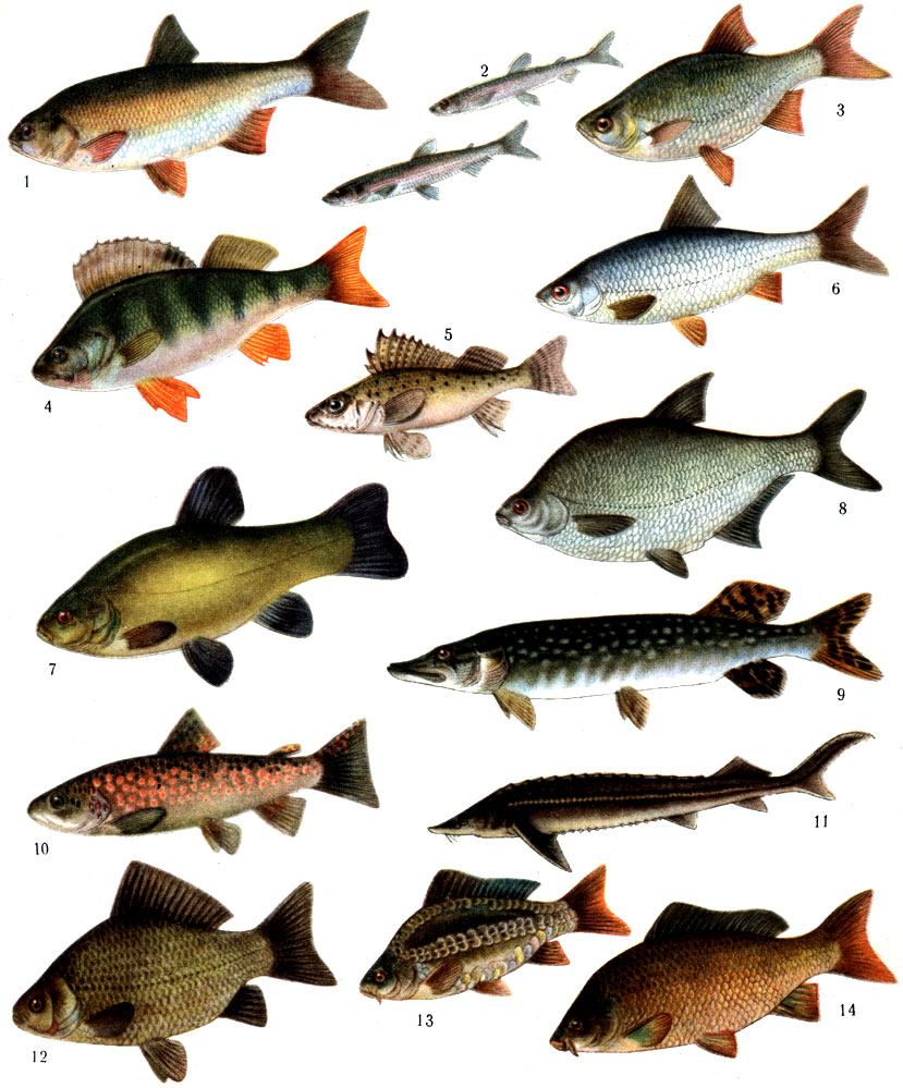 Внешний вид и повадки их разнообразны и зависят от местообитания, типа питания и других факторов.